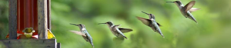 Hummingbird-landing-creativity