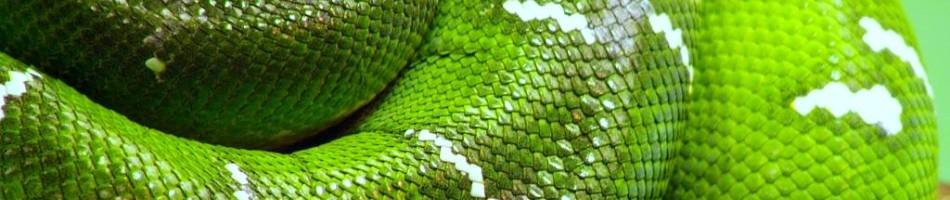 green-snake-creativity